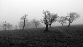 Dancing in Mist