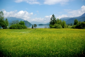 Scapes 08: Mondsee Meadow