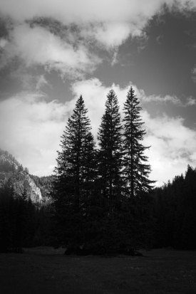 scapes-031_201405_Three-Trees-At-Hochschwab_Copyright-Jan-Soehlke